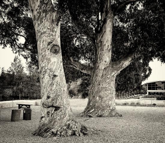 Trees by ludwigsdiana