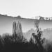 misty start by pistache