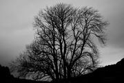11th Dec 2018 - monochrome silhouette