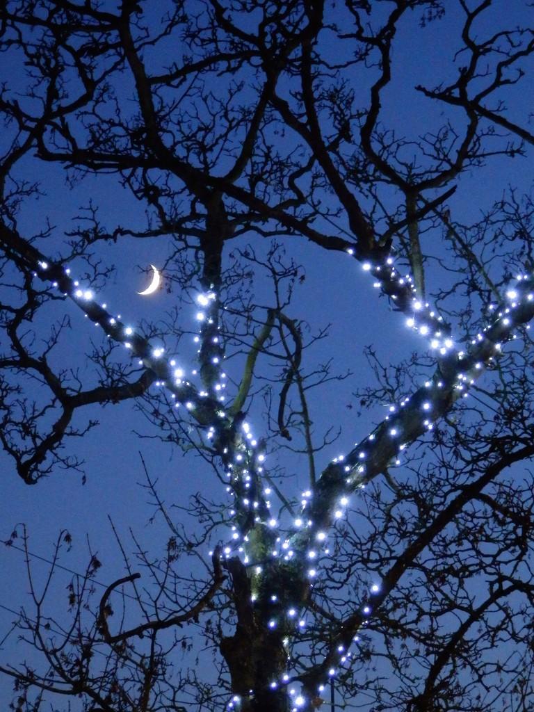 EXTRAS:  Twilight by casablanca