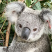 Krissy mending well by koalagardens