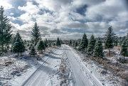 8th Dec 2018 - At the tree lot