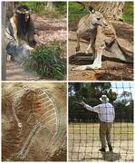 12th Dec 2018 - Geelong Aboriginal Experience