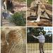 Geelong Aboriginal Experience