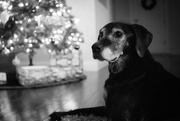 11th Dec 2018 - Sweet ol' Girl by the Tree