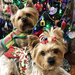 Sully & Jazzy Are Ready For Christmas
