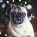 There's a List of Naughty Pugs?