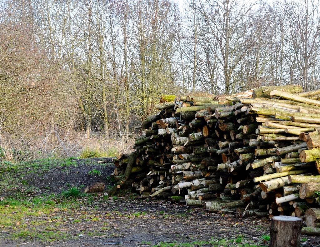 Woodpile by rosie00