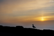 13th Dec 2018 - Seagull Taking in the Sunset