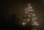 9th Dec 2018 - Tree Reflection