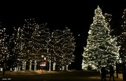 13th Dec 2018 - Christmas Lights