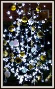 14th Dec 2018 - A bit of sparkle