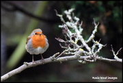 14th Dec 2018 - All fluffed up