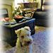 Pensive Alfie by beryl