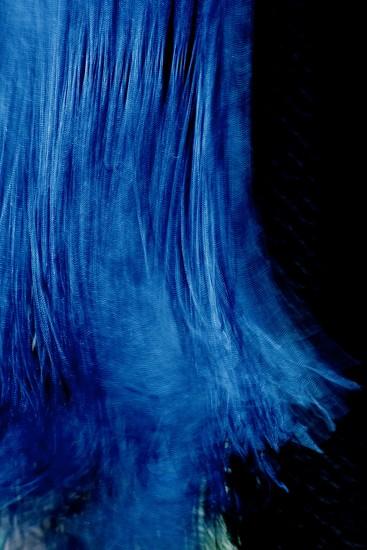 Fringe by blueberry1222