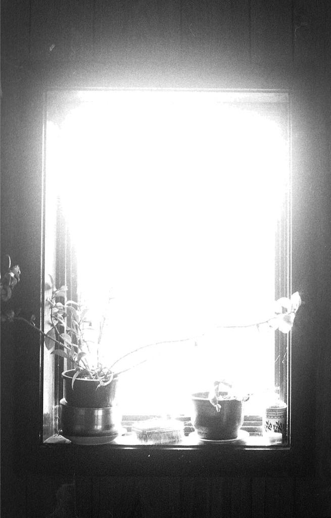 window by kali66