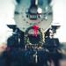 Christmas Choo-Choo by lyndemc