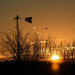 A Hawk, a Weather Vane, and a Kansas Sunrise