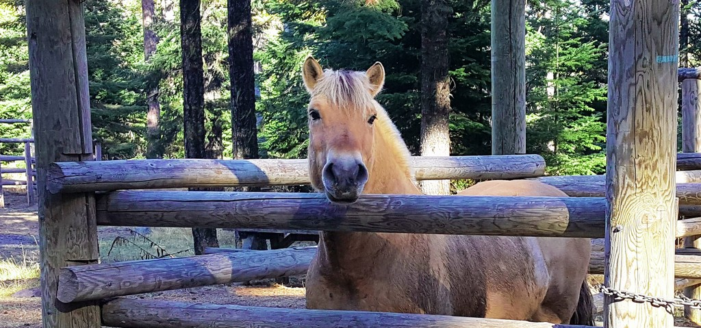 Ike in the corral at Gibson Prairie horse camp (Oregon) by teiko
