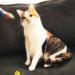 Pearl & The Cat Dancer