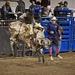 LHG_2492 Retro Bull Rider1