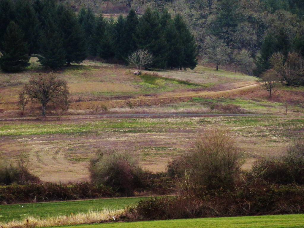 On the road to McMinnville  by granagringa
