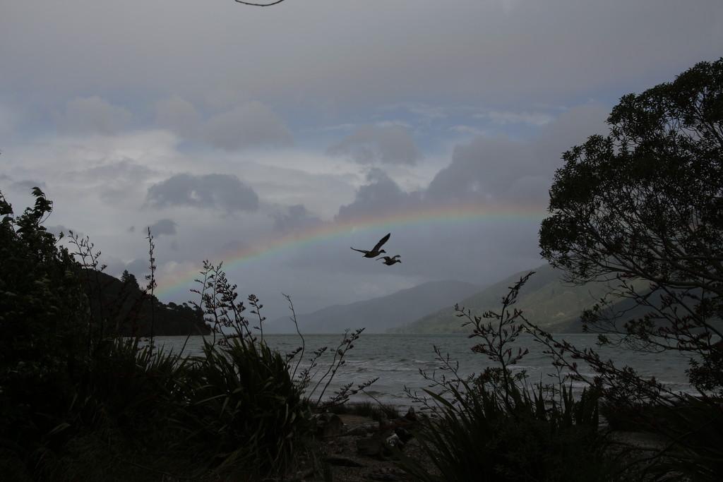 Rainbow ducks by kiwinanna