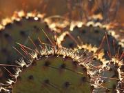 17th Dec 2018 - Cactus Patch