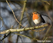 17th Dec 2018 - Cucle track robin