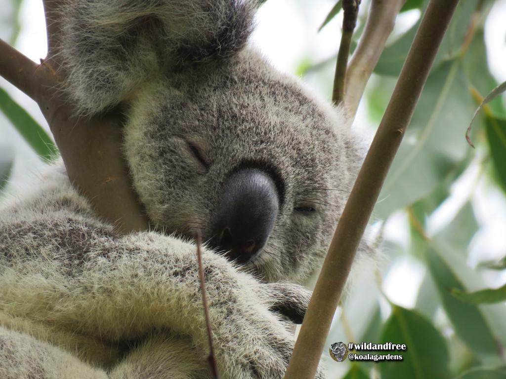 four K's by koalagardens