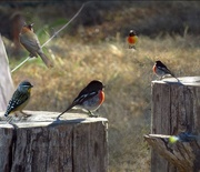 """18th Dec 2018 - The AGM of the """"Small Bird's Association""""."""
