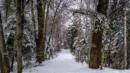 Snow fell by joansmor