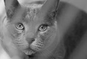 11th Dec 2018 - greycat eyes