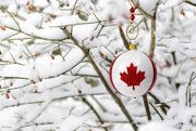 18th Dec 2018 - Canadian Christmas