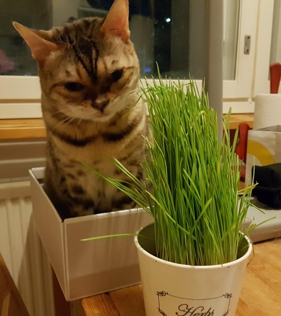 Box and grass by katriak