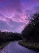 18th Dec 2018 - Purple Rain