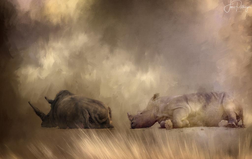 Long Rhinoceros Nap by jgpittenger