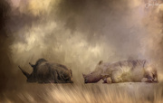 19th Dec 2018 - Long Rhinoceros Nap