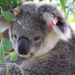 where I belong by koalagardens