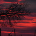 Kansas Sunset 12-18-18 by kareenking