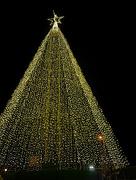 12th Dec 2018 - Tree of Hope