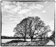 22nd Dec 2018 - Skeleton trees