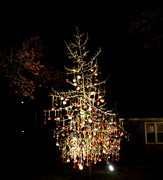 19th Dec 2018 - Decorated Tree