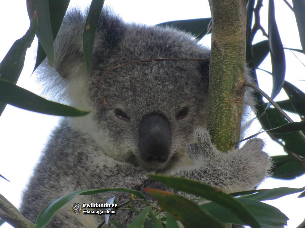 sleepy Krissy by koalagardens