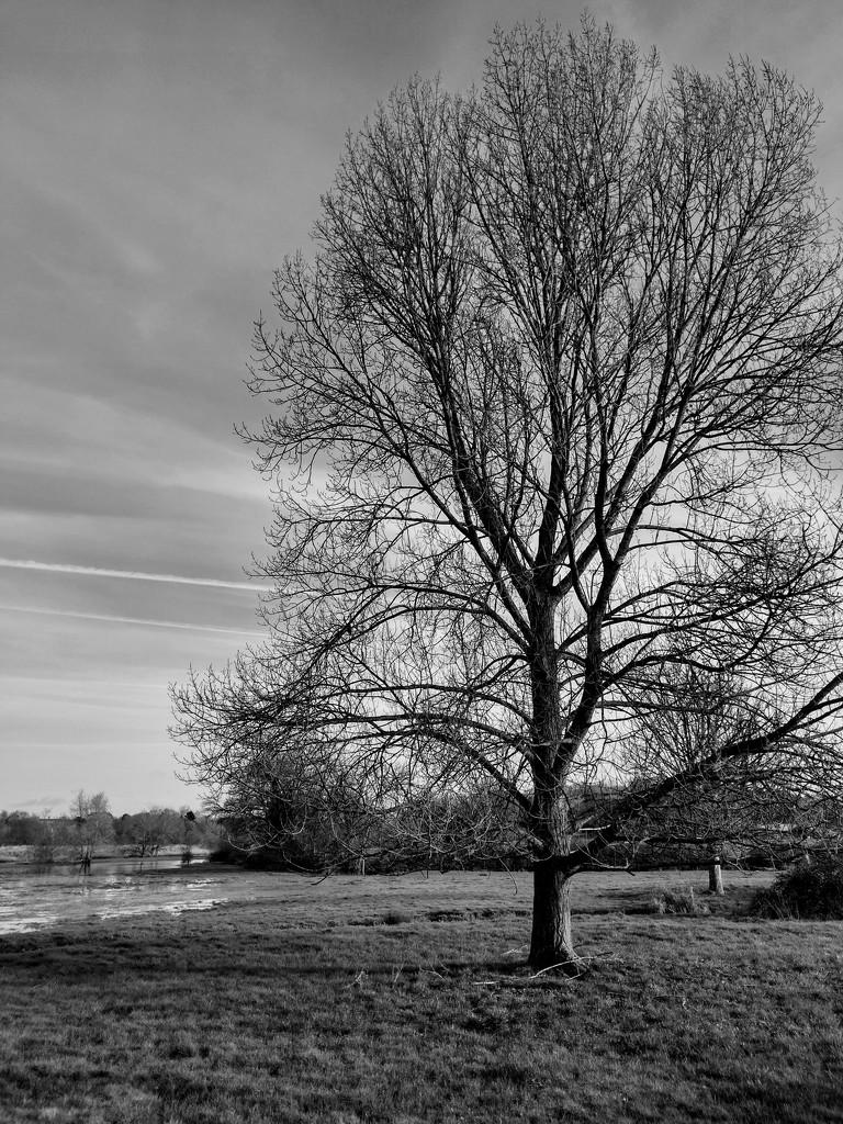 Tree in Winter by 4rky