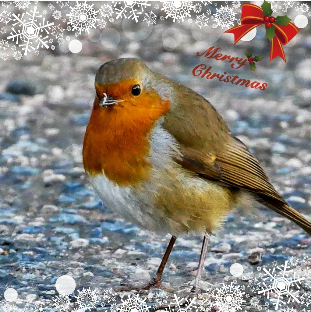 Wishing Everyone A Merry Christmas And A Happy New Year by carolmw