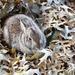 December 23: Winter Rabbit by daisymiller