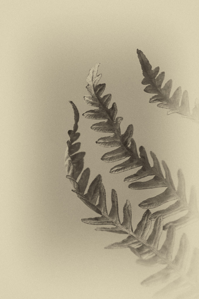 Frond by fbailey
