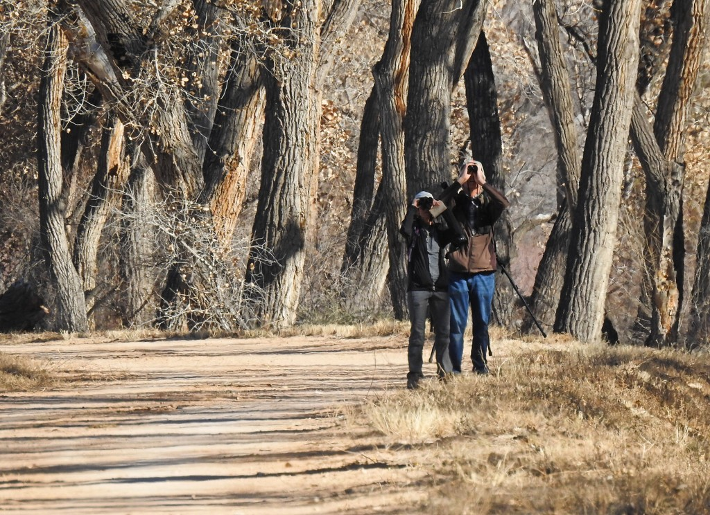 Audubon Christmas Bird Count, Dec. 22, 2018, in Albuquerque, New Mexico, USA by janeandcharlie