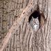 Sleepy owl! by fayefaye
